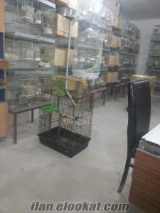 İzmir izmirde papaganlar