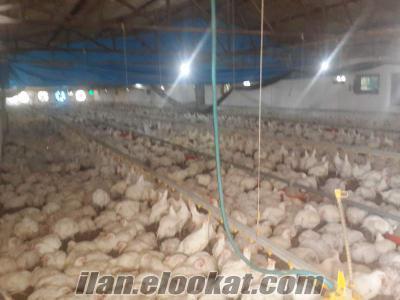 bandırmada sahibinden satılık broiler çiftliği