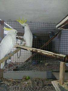 izmirde papagan lar
