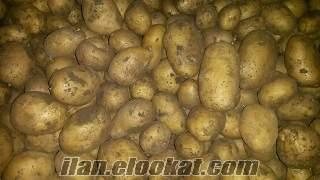 Afyonkarahisarda patates