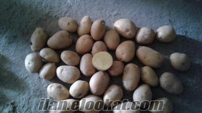 patates afyon agire ve marabel