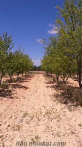 70 dölüm ağaçlık +su+ev+boş alan tarla