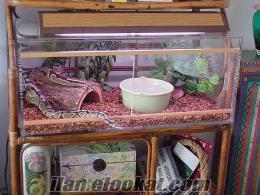 piton yılanı tum malzemelerıyle satılık