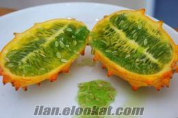 İlginç meyve/sebze tohumları- 1