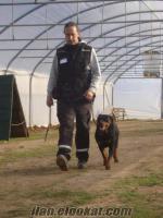 İstanbulda köpeğinize kendi ortamın ızda kesin garantili eğitim