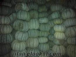 patates soğan kabak adapazarı