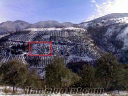 Bursa gemlik güvenli köyü satılık zeytinlik