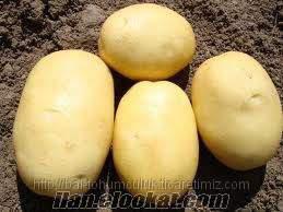 Lezzetiyle ün yapmış Afyon patatesini direk üreticiden daha ucuza alın.