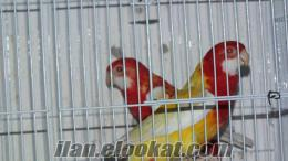 Satılık Papağan Üretimhanesi