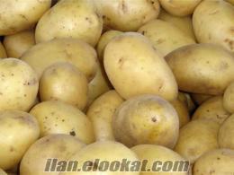 satılık 1kalite afyon patatesi