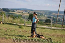 TEAM ERK - Köpeğinizi Eğitimde Profesyonellere Emanet edin