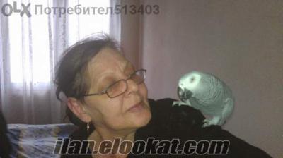 Satılık jako papağan