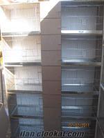 istanbul maltepe satılık muhabbet kuşu kafesleri