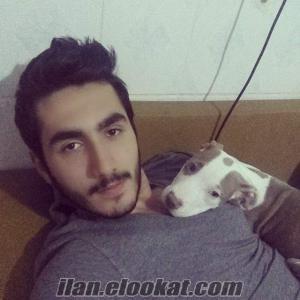 İzmir/Köpeğiniz için Aile ortamında pansiyon yada bakıcı
