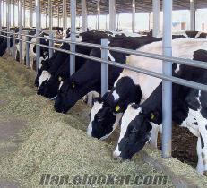 islam et tarım ve hayvancılık :