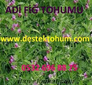 Adı Fiğ Tohumu Çeşitleri, Adı Fiğ Tohumu Özellikleri, Adı Fiğ Tohumu Üretimi