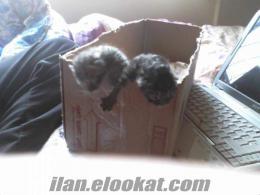 sancaktepede yenı doğmuş yavru kedileri ücretsiz sahiblerini beklıyorrr ..