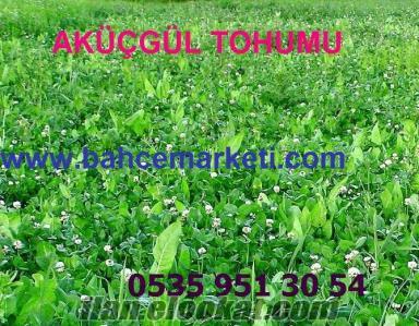 Satılık tohum çeşitleri, Üçgül tohumu satışları, Ankara, İzmir, İstanbul ak