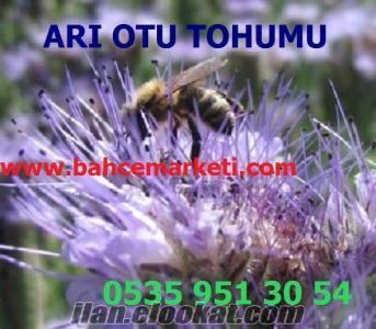 Arı Otu Tohumu Çeşitleri, Arı Otu Tohumu Özellikleri, Arı Otu Tohumu Üretimi