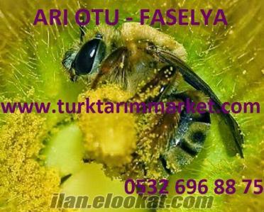 Arı Otu Tohumu, Arı Otu Faselya, Arı Otu Tohumu Ekimi, Arı Otu Nedir, Ar
