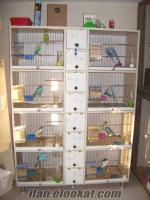 balıkesirde sağlık nedeniyle maliyetine 20 takım yavrulu muabbet kuşu