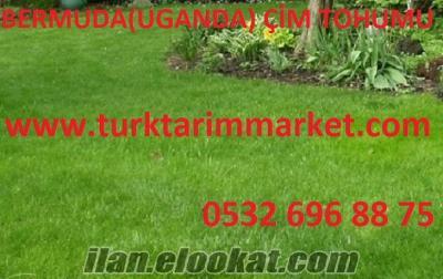 Bermuda çim tohumu fiyatı, Bermuda çim tohumu fiyatları, Bermuda çim tohumu,