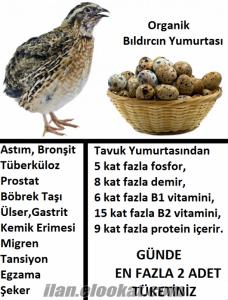 İzmir Organik Döllü Bıldırcın Yumurtası