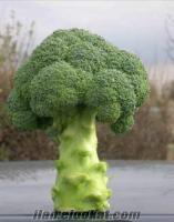 Brokoli spiridon f1 tohumu