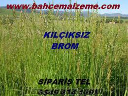 kılçıksız brom tohumu satın al, satılık kılçıksız brom, kılçıksız brom nereye