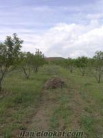 Eskişehir Mahmudiye badem bahçesi