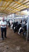 AKalite Süt İnekleri Gebe Düveler ve1ila12aylık danalar