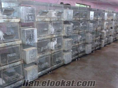 Satılık Tavşan ve Tavşan Kafesleri
