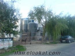 Eskişehir Tepebaşı tavuk çiftliği
