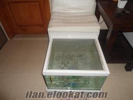 bodrumda sahibinden satılık doktor balık akvaryum