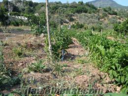 Sahibinden Satılık Antalyanın Kumluca İlçesine Bağlı Erentepe Köyünde Tarla