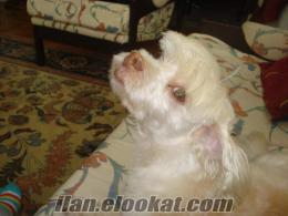 kadiköy modada 12.12.2010 tarihinde köpeğimiz kayboldu..