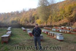 Zonguldak Çaycumada satlık arı