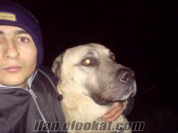 Ankara köpek gezdirme
