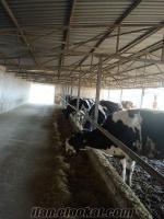 Pınarhisarda satılık çiftlik