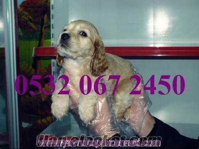 satılık yavru köpekler