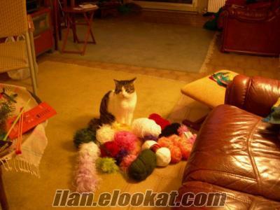 uzun süreli kedi bakımı cat sitting pisipalas