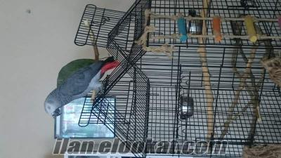 Küçükçekmece jako papağan