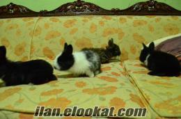 Her Cins Tavşan yavrusu ve damızlık bulunur.