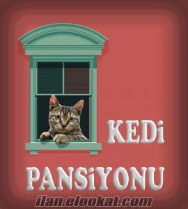 Ankara Kedi Pansiyonu