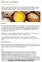 Bandırmada bıldırcın yumurtası