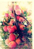 elma soğuk hava depomuzda