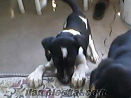 köpek bakim evi Kayseri