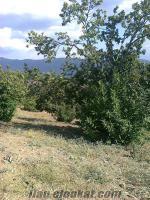 Satılık KESTANE Bahçesi Aydın'ın Köşk ilçesine bağlı olan Akçaköy'de!!!!!!!