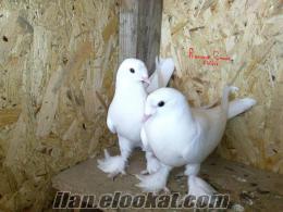 şebab beyazlar