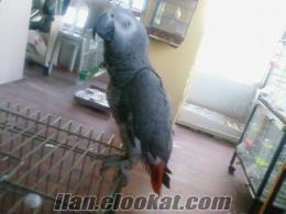vanda satılık hertürlü hayvan